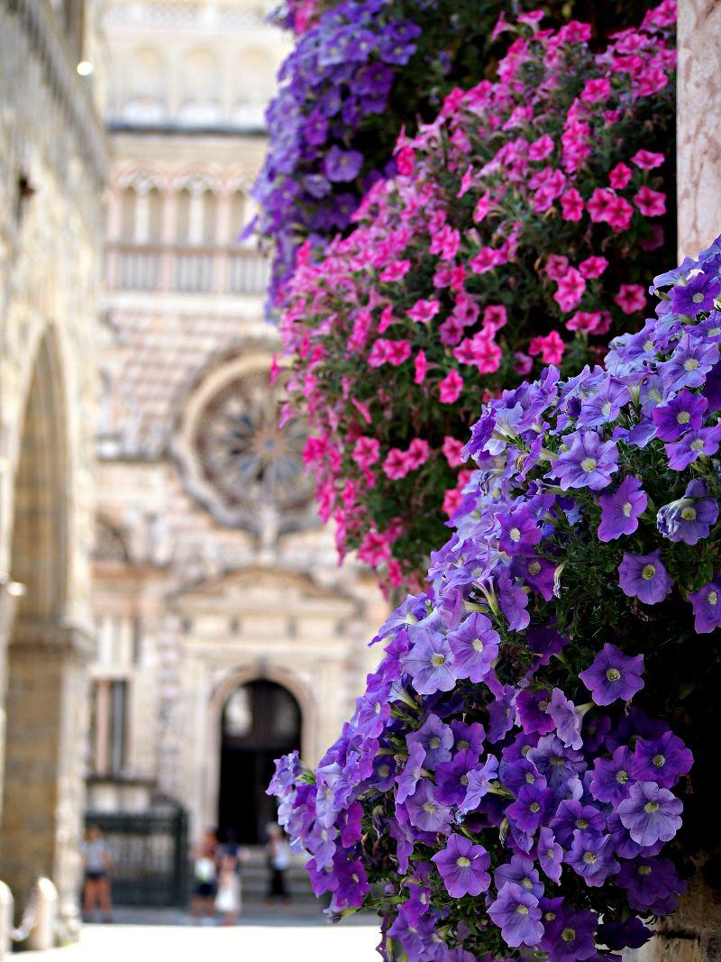 opět překrásné květiny směrem k bazilice