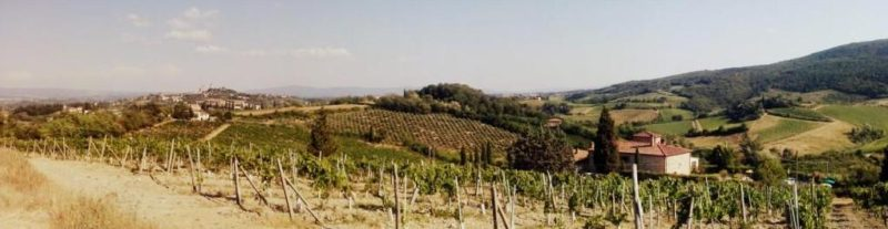 vinice vernaccia itálie