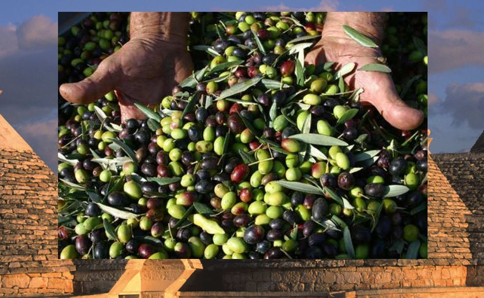 olivy apulie