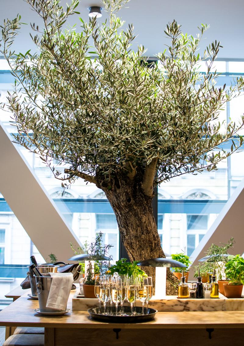 olivovník strom